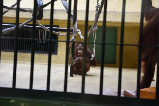 Zoo 2016/3/29 6