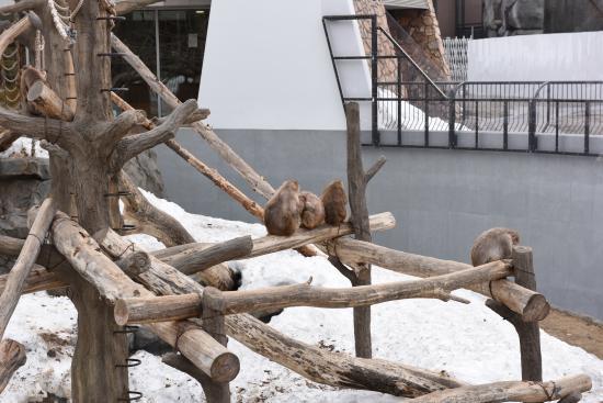 Zoo 2016/3/29 8