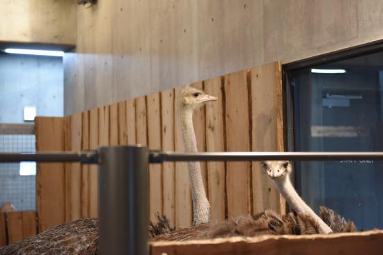 Zoo 2016/3/29 11