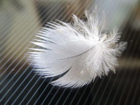 手羽先と手羽元の接続部ら辺のウロコ羽。