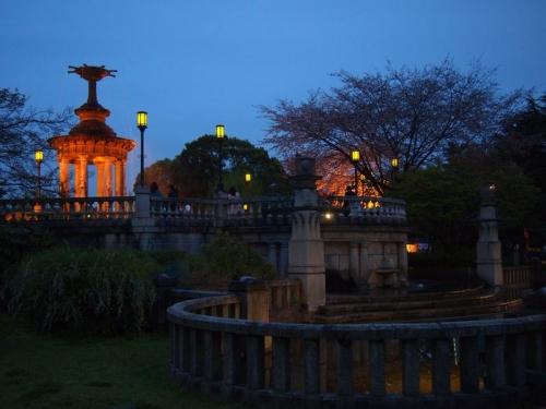 鶴舞公園夜桜