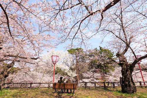spring-japan-cherry-blossoms-national-geographics-1611.jpg