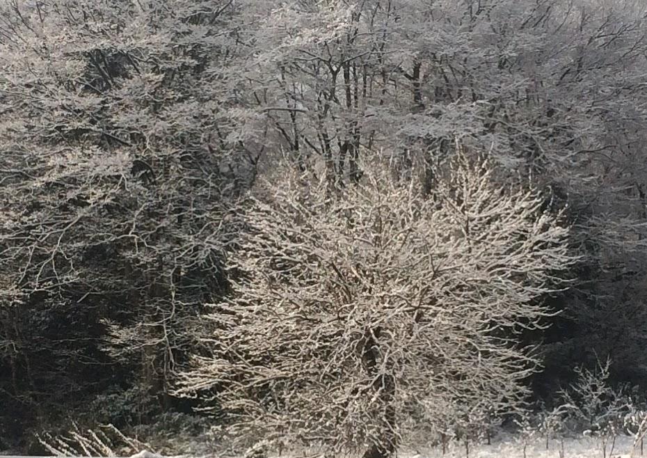 2月25日雪