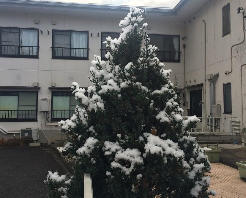 2月25日雪2