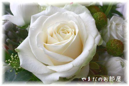 2016年ドリルの命日のお花③