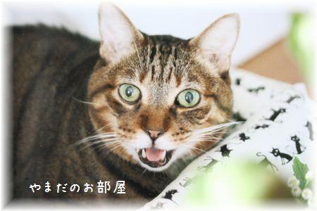 2016年ドリルの命日のお花①
