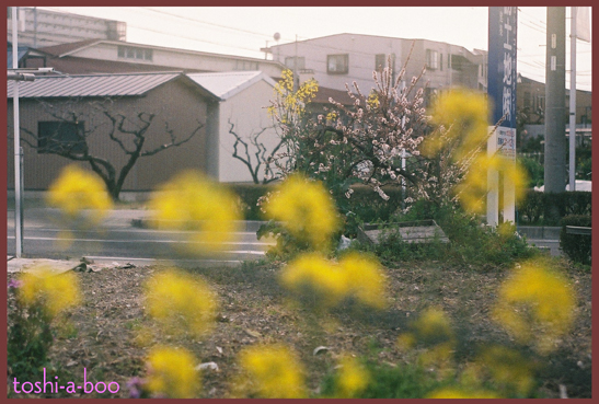 blogmichisugara_20160401182906055.jpg