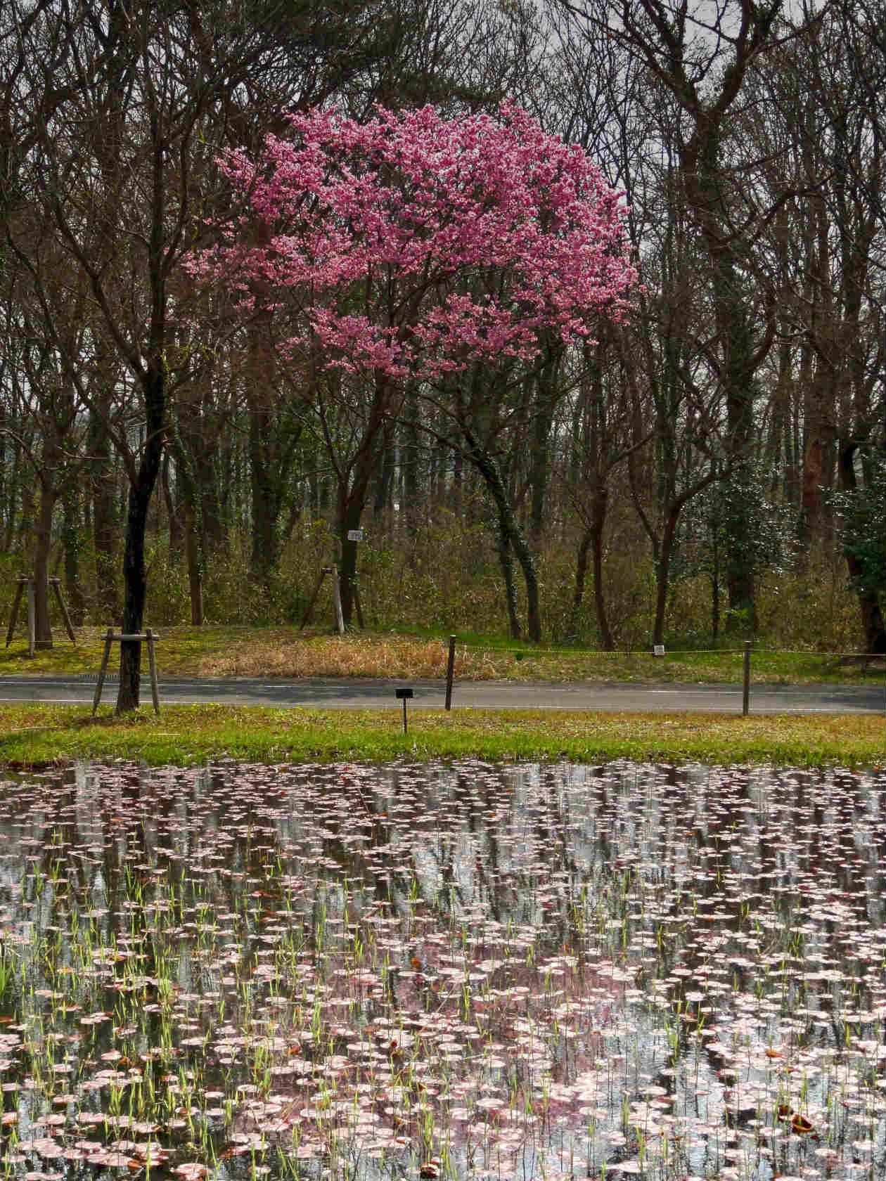 s湿性自然植物園