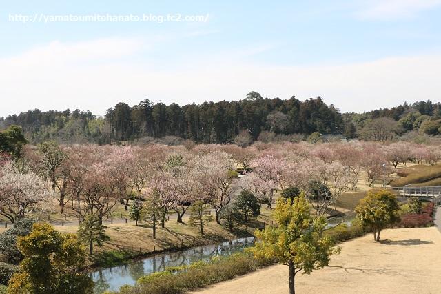 IMG_0305_kairakuen.jpg