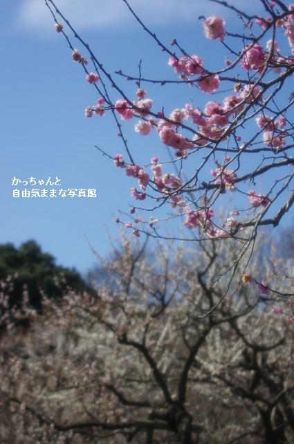 偕楽園 (5)
