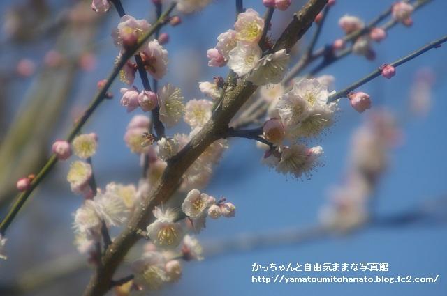 偕楽園 (3)