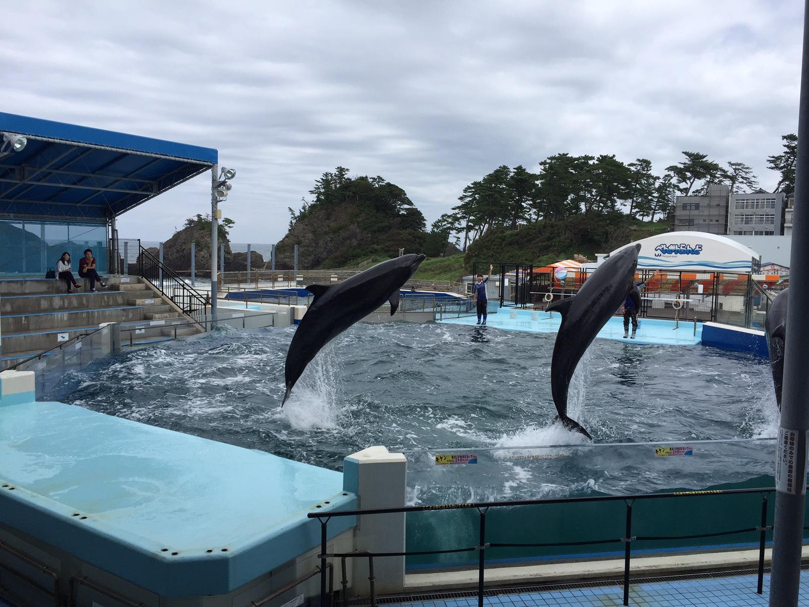 1松島水族館1 2015