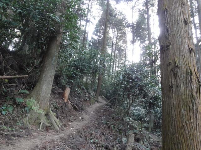 2016年2月28日 京都一周トレイル 山道