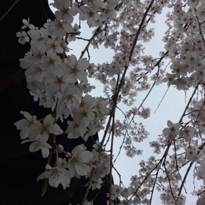 fc2blog_20160331192515c74.jpg