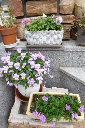 みっちゃんの庭 2016 2月