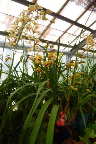 植物公園 緑花センター(温室) 2016 2月