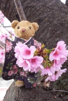 桜 2016年 3月13日(mt.okuho)