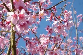 四季の郷公園 2016 3月15日(mt.okuho)