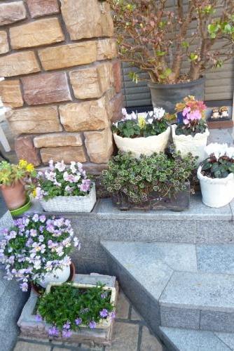 みっちゃんの庭 2016年 3月15日(mt.okuho)