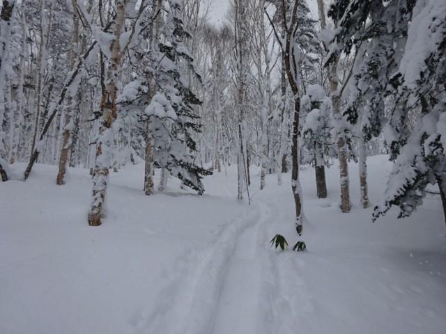 12月31日 平穏な林の中をテクテク歩く