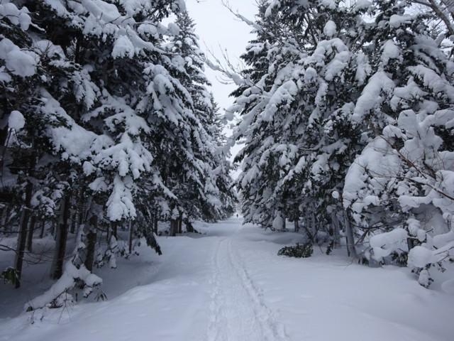 1月2日 今回は南東側,喜茂別コース