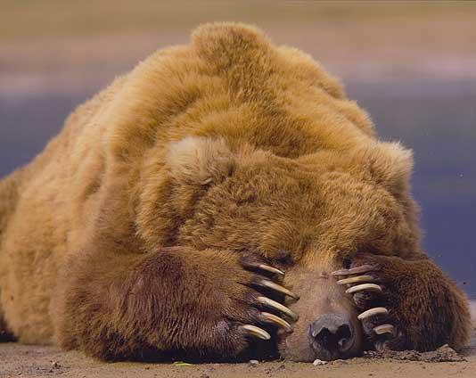 contest_bear.jpg