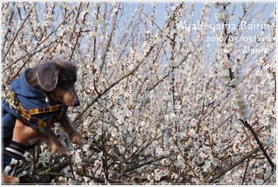 季節の花「梅」を見に Part2 ④