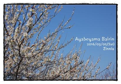 季節の花「梅」を見に⑤