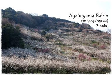 季節の花「梅」を見に Part2 ⑤