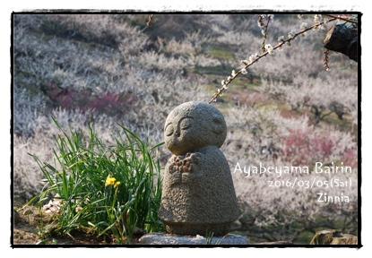 季節の花「梅」を見に④