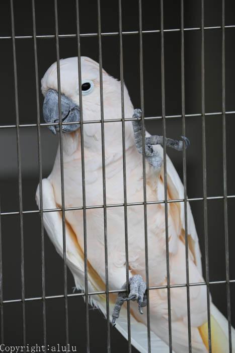 日本平動物園 オオバタン しゃべる