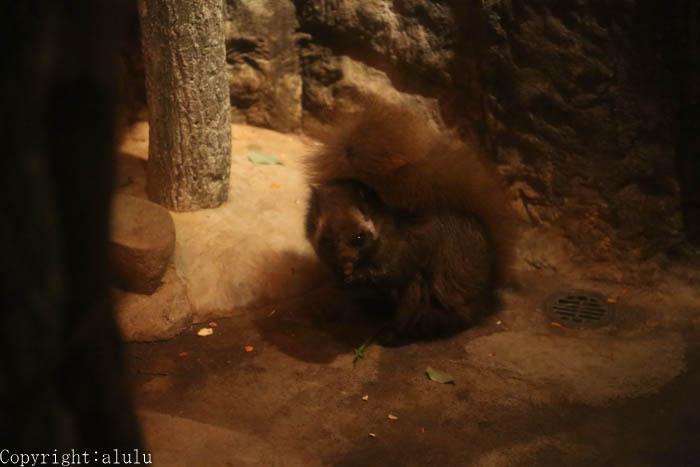 ムササビ 動物園