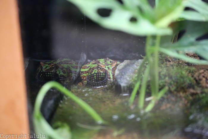 カエル 動物写真