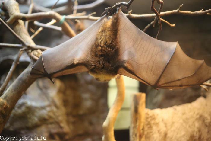 上野動物園 コウモリ 画像
