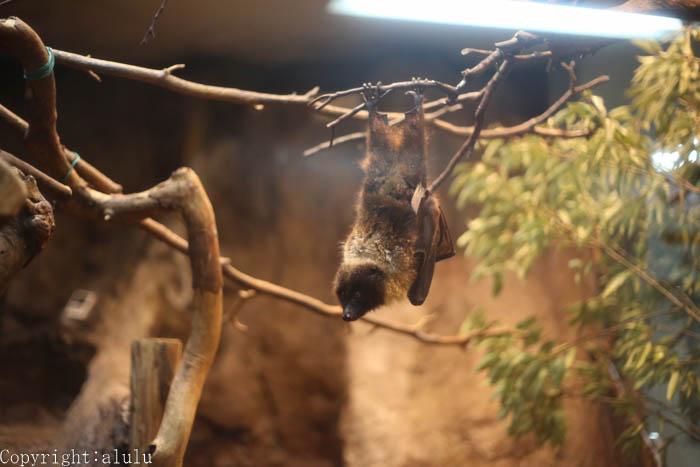 上野動物園 コウモリ