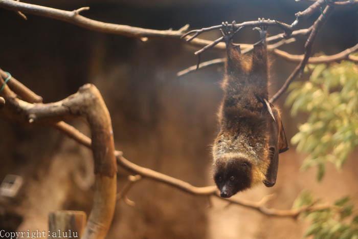 オリイオオコウモリ 動物園 写真