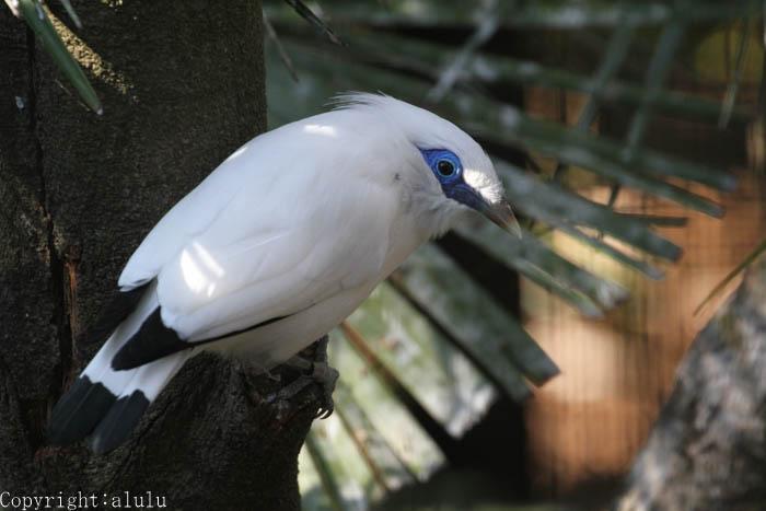 横浜 動物園 白い鳥