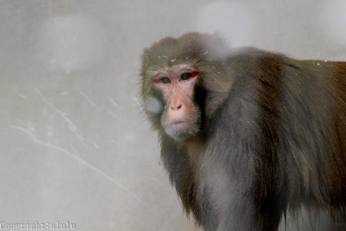 サル さる 画像
