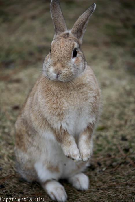 ウサギ 動物写真