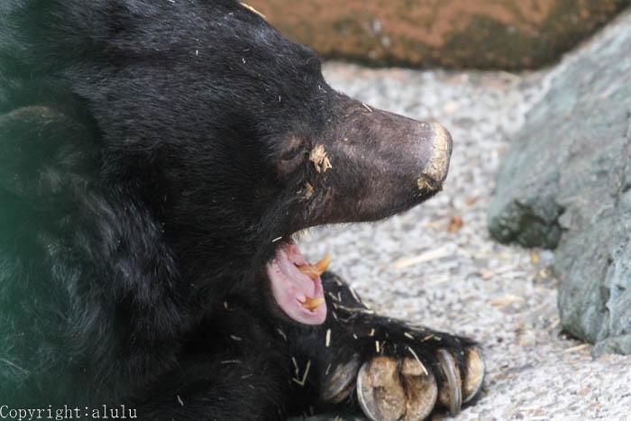 和歌山公園動物園 ツキノワグマ ベニー