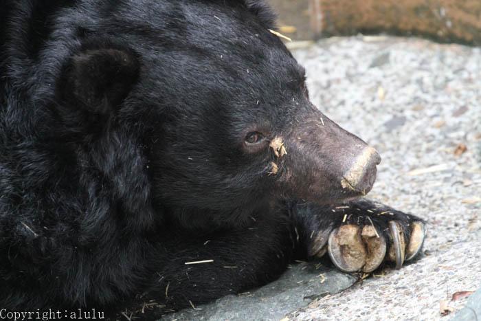 和歌山公園動物園 クマ
