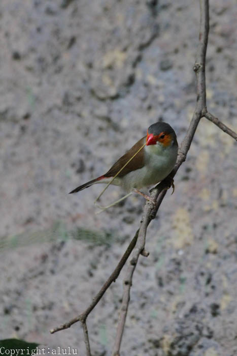 日本平動物園 鳥類
