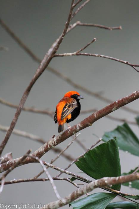 鳥類 写真 動物園