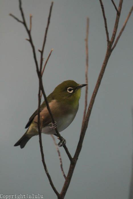 鳥類 画像 トリ