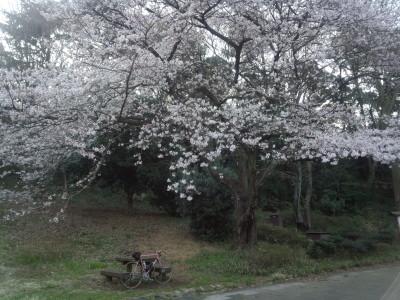 photo_derosa_sakura_0331_1_2016_03311.jpg