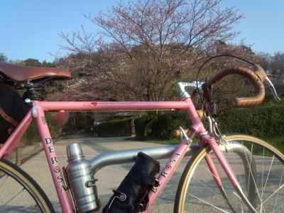 photo_derosa_sakura_0331_3_2016_03311.jpg
