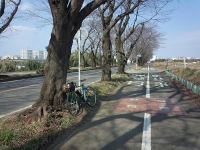 photo_randner_yamaotoseirinnsyo_6_2016_0227.jpg