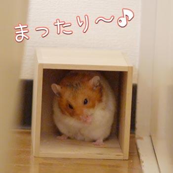 hanami5_20160401223012c30.jpg