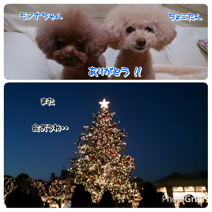 201512262121517e3.jpg