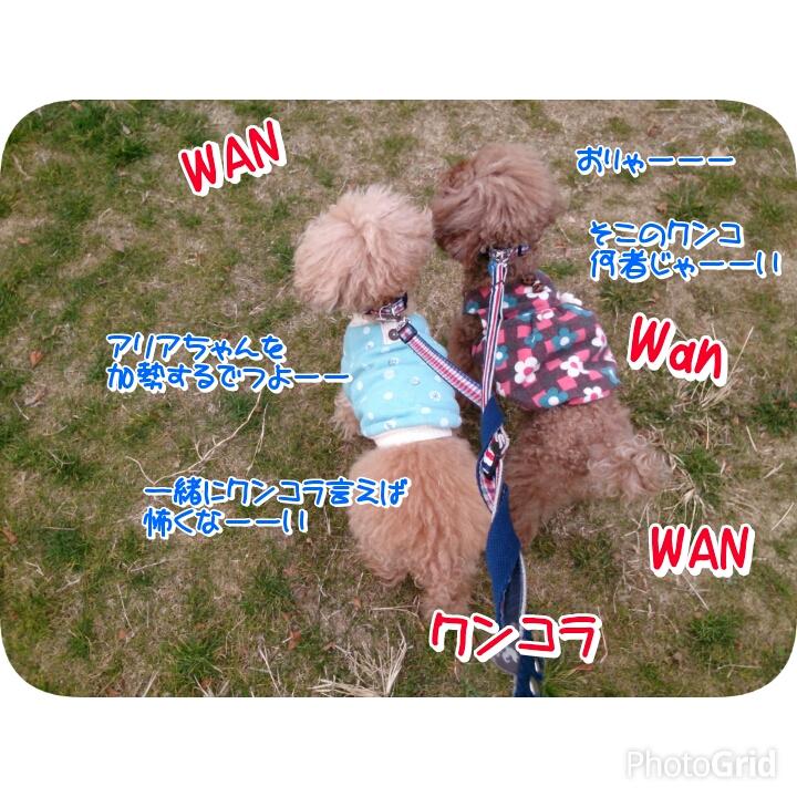 20160129171550d3c.jpg
